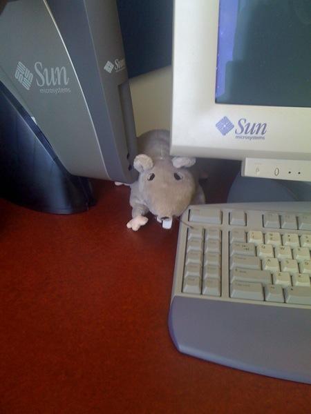 Ikea rat