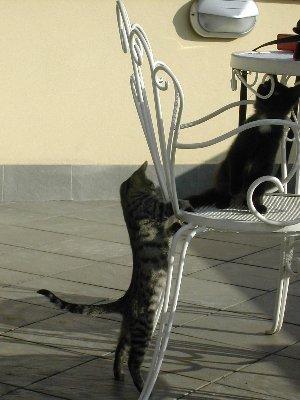 Roman cats, Oct 14, 2003