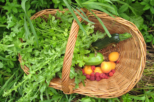 harvest in a basket