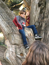 Mitchell in a tree.