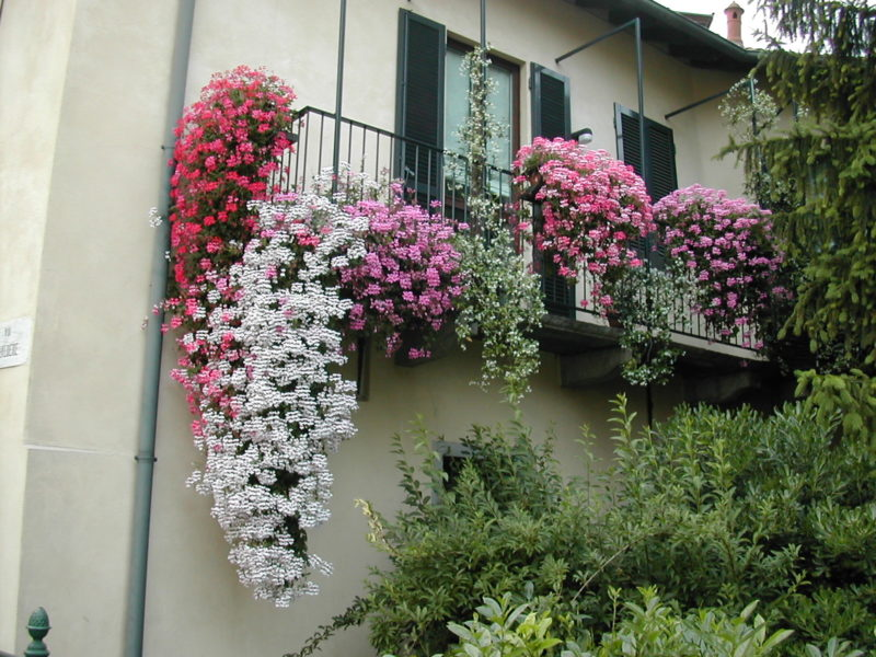 flowering balcony in Lecco.